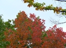 Barwy złotej polskiej jesieni w październiku