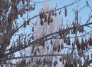 Drzewa pokryte szadzią przy 20 stopniach mrozu