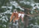 Śnieżna i mroźna zima na polskich nizinach
