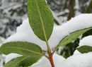 Pod śnieżną kołderką