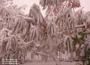 Zdjęcia z pierwszego powiewu zimy