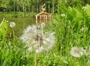 Wiosna w leśnym arboretum