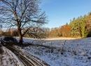 Śnieżny las