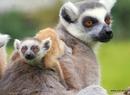 Najmłodsi mieszkańcy wrocławskiego zoo. Zobacz zdjęcia